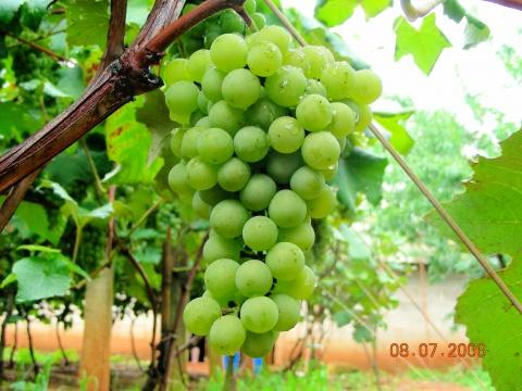 云南红河州的弥勒:诗画一样的葡萄酒之乡(转) - MING - MING - BLOG
