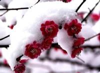 访梅 - 冬月霜 - 冬月霜的博客