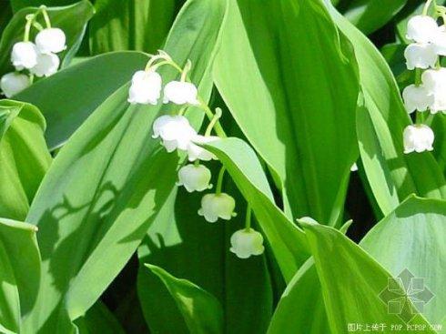 常见观赏植物(二) - 黑白 - 黑白的博客