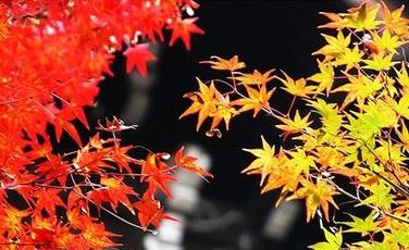 【小说】忧伤的叶子 - 芊芊若水 - 童心中的童话