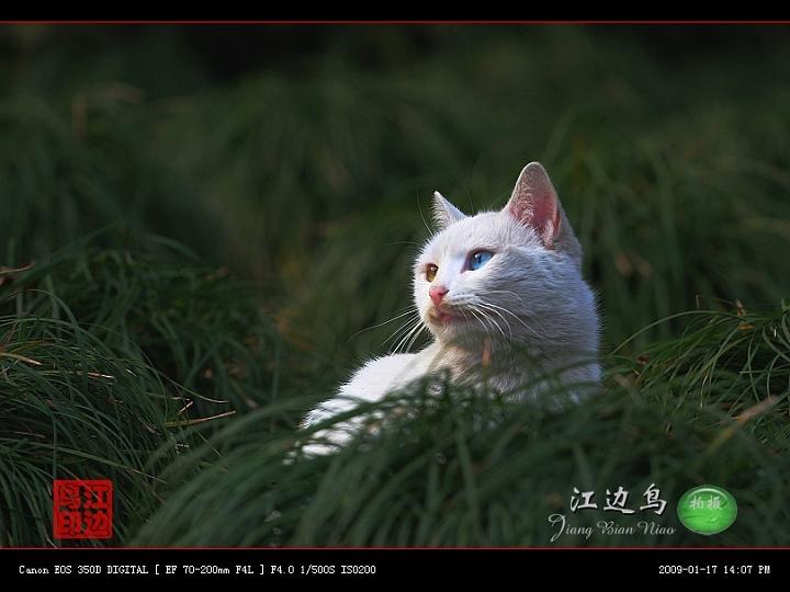 [原创摄影] 小区里的流浪猫 - 江边鸟 - 江边鸟的博客
