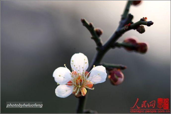 安徽宏村的朱子治家格言 - 冷暖人生 - 冷暖人生