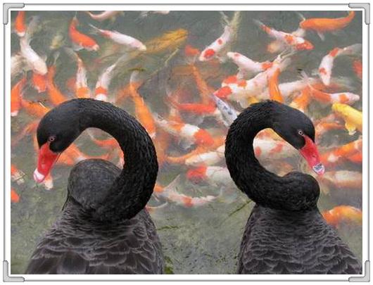 恩爱夫妻的经典瞬间 {温馨组图} - o℃ 的浪漫 - し梦の飘渺