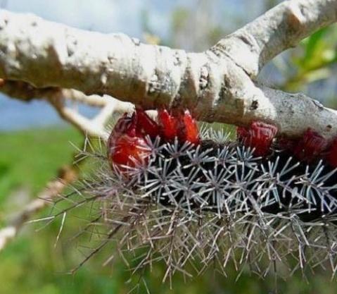【图文】世界最毒六种生物,触摸即死! -  红杏 - 红杏