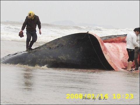 直击抹香鲸之支离破碎 - 乐儿 -  乐儿小筑