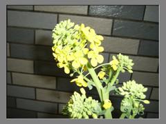 给你阳光,你就灿烂 - guohuachan - 青山绿水的博客