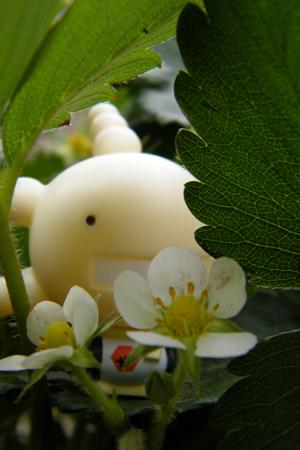 新买的花和新拍的照片 - 谈天一卜 - 跳出三界外