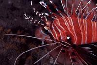 潮间带二:最圆的珊瑚环礁---广东省东沙环礁 - liaodonger - wmliaodong 的博客