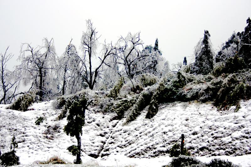 [原创]突出重围——冰灾记忆之六 - 歪树 - 歪树