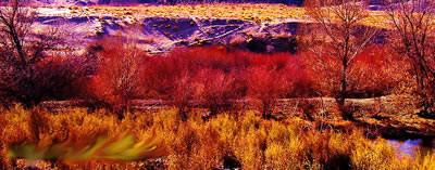 (原创)红柳魂--心路漫漫第一篇 27首 - 疏勒河的红柳 - 疏勒河的红柳【原创博客】