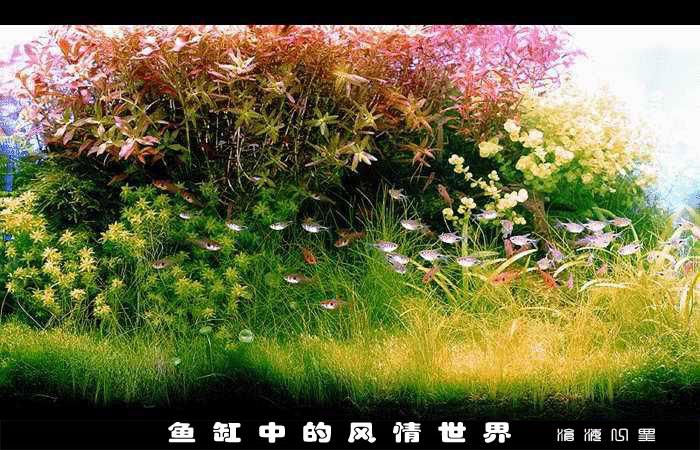 特效风景 - 端木秀禾 - 端木秀禾的博客