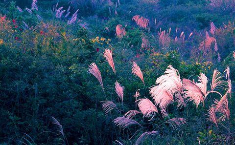 诗歌:春醉 - 草根 - 草根馨园