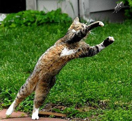 动物捕猎 精彩瞬间 - 山东豹 - 山东豹的博客