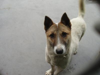 """再见,小""""埃迪""""! - 亚洲动物基金 - 亚洲动物基金"""
