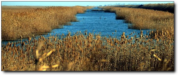 (原创)黄海湿地自驾游(8)——湿地风光 - 鱼笑九天 - 鱼笑九天