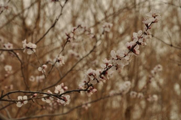 春到玉渊潭之二 - 陶东风 - 陶东风