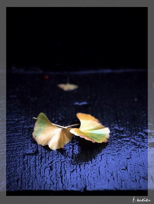 【转载】只想在你的怀里栖息 - 澐海0602 - 澐海2009~09~26