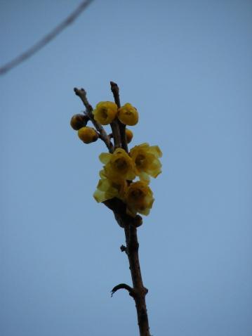 冬之韵〔摄影〕 - 梅儿 - 梅儿心语