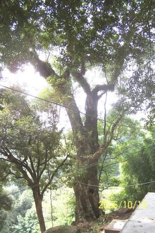 仙洞山的树…… - 老陶 - 行走时光
