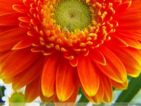 自然光---非洲菊 - 随风而去 - 大静则成虚 虚无则成静 化大静而成大美