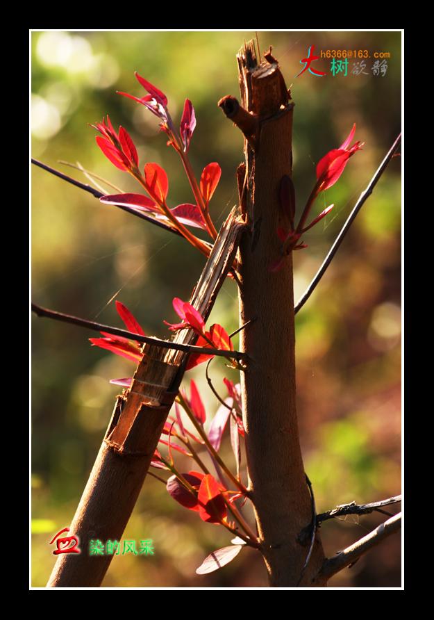 【原创】花、生命与风采 - 大树欲静 - 大树欲静的博客