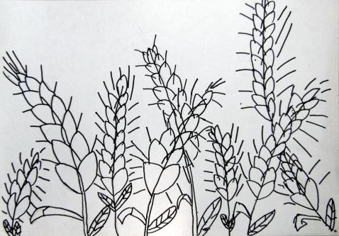 10月11日 丰收麦子 B组