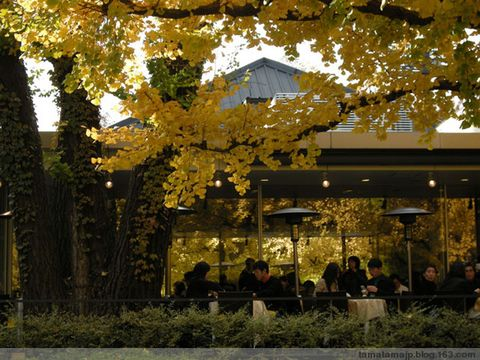 神宫外苑银杏祭 - tamatama - 一刻公寓--tamatama的博客