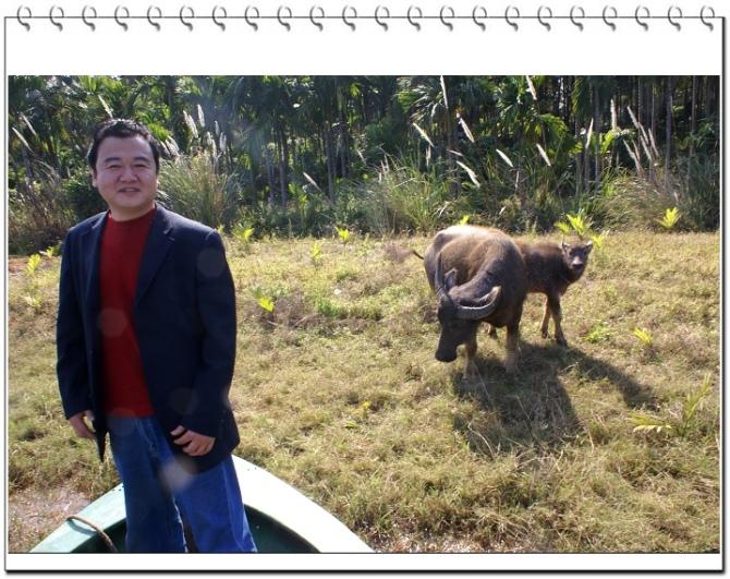 牛年遇牛 - 刚峰先生 - 天涯横呤