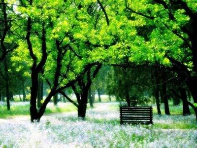 公园的长椅 - 雪颜 - 雪颜的博客