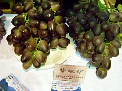 【转载】2008年金华市精品水果展示展销会上的葡萄新品种 - 園艺无忧(YYWY) - 園艺无忧YYWY