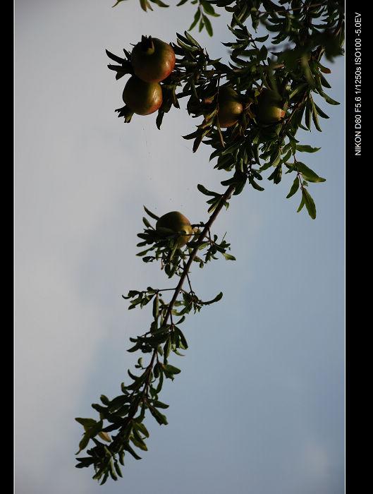 [原创摄影]石榴图 - 运动摄影旅行 - 运动摄影旅行