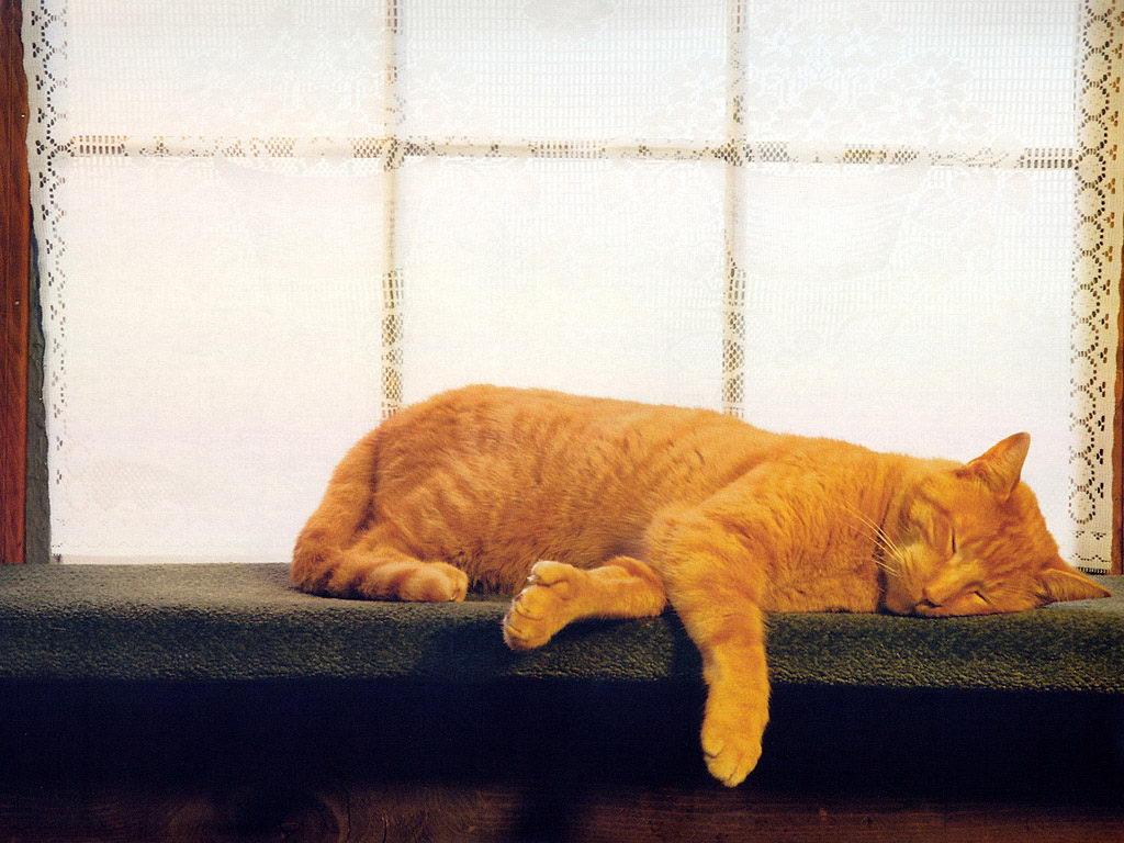 可爱宠物-猫咪 - 蓝天 - 宁静的夜