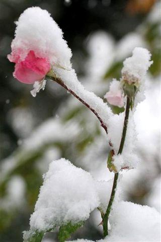 京城秋雪(张东军摄影) - 苏泽立 - 苏泽立的博客