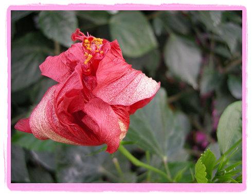 节日献花---世界花卉大观园(3) - 自由主妇 - 自由主妇