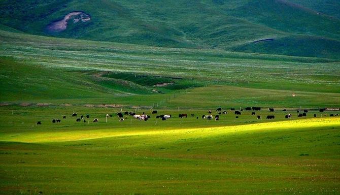 2010年5月12日 - 昆仑山上一棵草 - 昆仑山上一棵草的博客