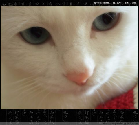 爱·玲·猫 - blovezoeqian - 菥·茜