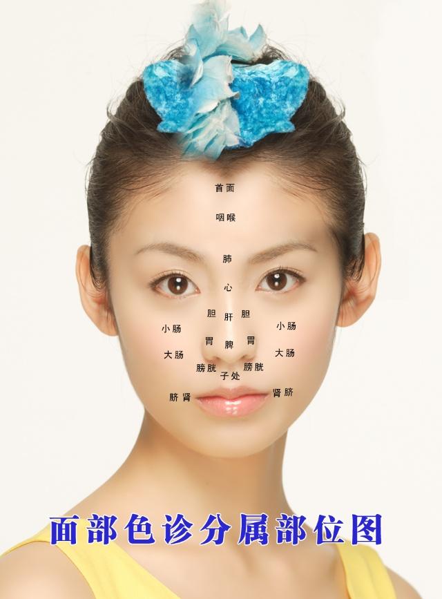 中医面诊部位图 - 一代玩童 - 一代玩童