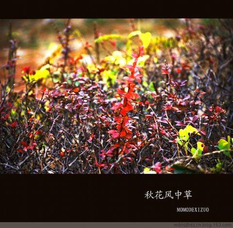 [原创图文]秋花风中草 - MOMO - MOMO 的博客