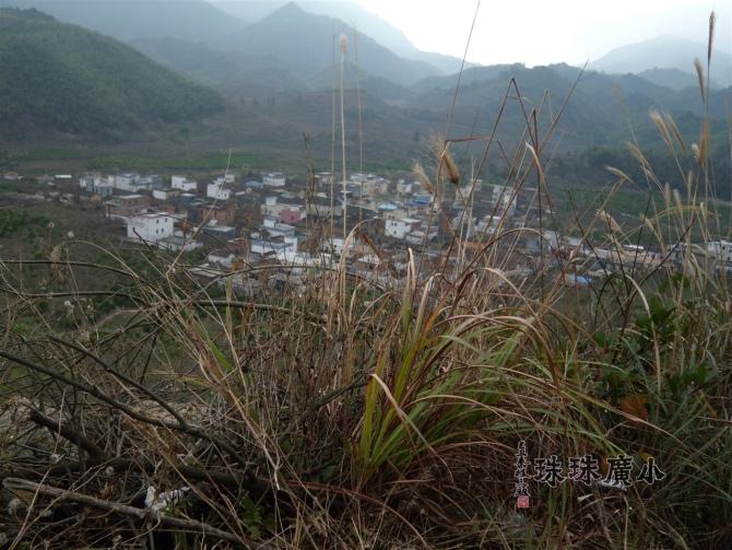 冬日的溪头村正是青梅花开灿烂时胜利总结 - julinju2008 - 邻居千色自由行