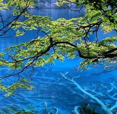 (原创)忘我,就是最大的幸福 - 绿色天堂 - 绿色天堂