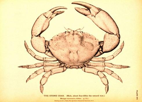 令人悚然的美国人吃螃蟹精神 - 李文波 - 李文波网易空间