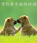 爱情《圣经》 - 蒙 恩 - 杨益华