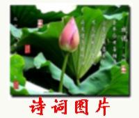 为福星老师【蝶影】组照题 - 无再少 - 无再少的博客