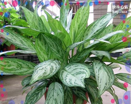 引用 18种常见室内植物的功效 - lymywx - 山涧小溪水