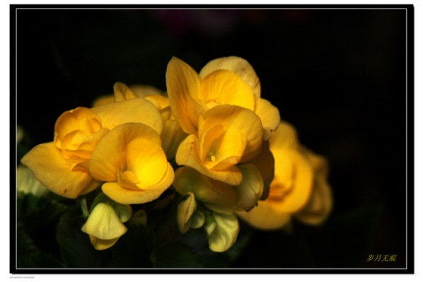 花开,不一定只在春天 【原创摄影】   - 岁月无痕 - 岁月无痕