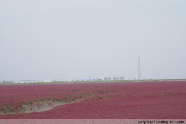 美丽的红海滩 - 风清云淡 - 风清云淡的博客