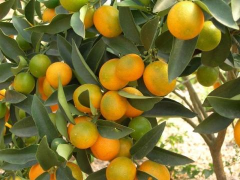 """2008年12月1日由""""柑橘风波""""引起的思考 - 几何图形的世界 - 几何图形的世界"""