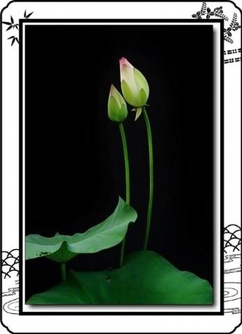 2009年3月12日 - 绿韵 - 绿韵的博客