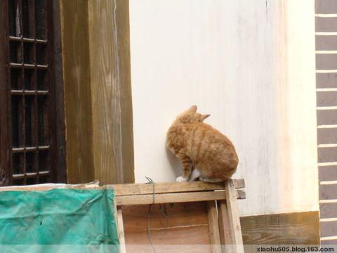 磁器口的猫猫狗狗们 - 小狐505 - 风为裳的博客