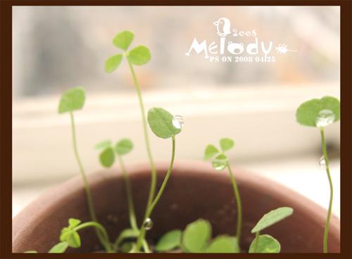 三叶草成长记 - melody.dd - 华丽的D调